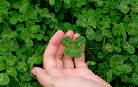 The Origin of the Four Leaf Clover