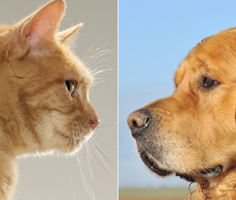 Dogs Vs. Cats – The Epic Showdown